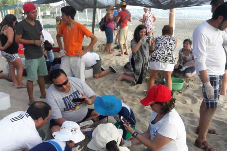 Baby Turtle Release near Ixtapa Zihuatanejo | Pacific Tours Ixtapa. Participate in the release of baby turtles and be part of their conservation while your visit to Ixtapa Zihuatanejo. Activities in Ixtapa Zihuatanejo