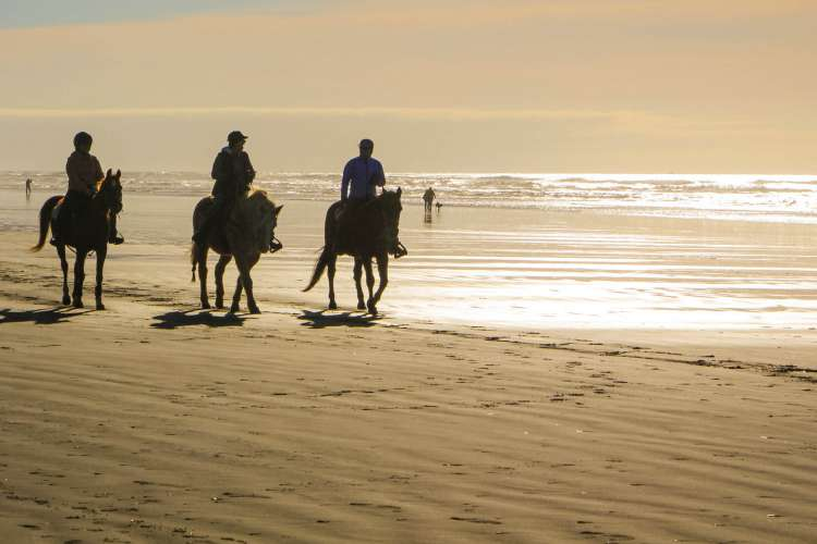Zihuatanejo Horseback Riding & Snorkeling | Pacific Tours Ixtapa. Come and enjoy two activities in one day, Horseback Riding in Playa Larga near of Ixtapa Zihuatanejo and Snorkeling at las Gatas Beach in Zihuatanejo Mexico. Tours in Ixtapa Zihuatanejo Mexico