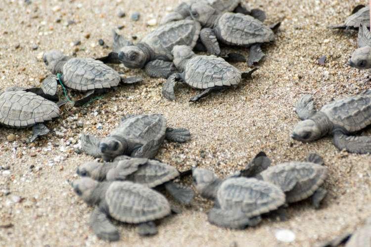 Ixtapa Observing while Crocodiles & Releasing baby turtles (2 in 1)